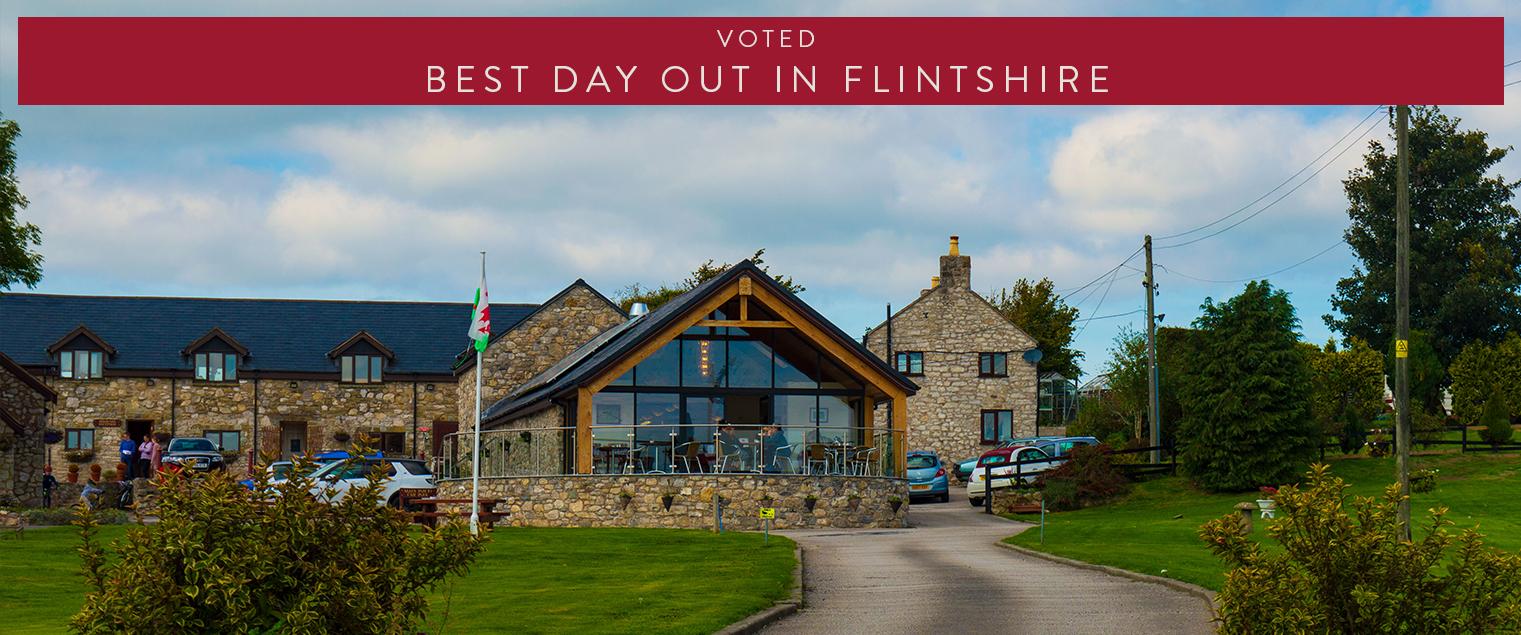 Pet Cemetry voted Best Day in Flintshire
